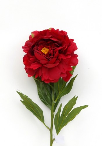 pivoine rouge
